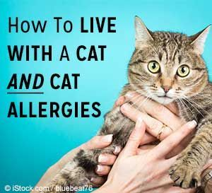 How to live with a cat and cat allergies. 10 hypoallergenic cat breeds