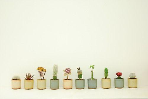 nature . flowers . plants . floral . collection
