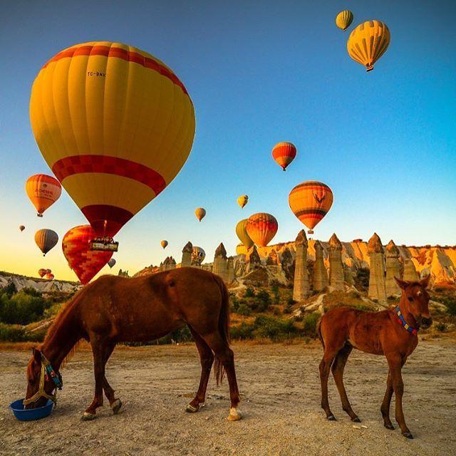 "discovercappadocia: ""land of #beautiful horses : #cappadocia #カッパドキア #旅行者 #熱気球 🎈🎈 (Photo:cappadocia) """