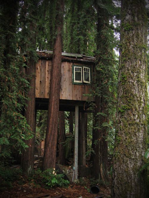 treehauslove: Meditation Treehouse. A great meditation spot about 12 feet up in redwood trees. Fresh mountain air and beautiful nature is all you need. Located in Boulder Creek, California, USA. Treehouse book recommendation: Tree Houses You Can Actually Build: A Weekend Project Book (Weekend Project Book Series).