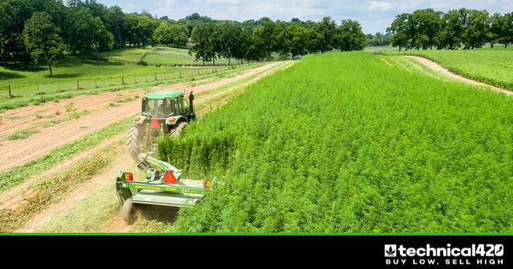 The hemp oil industry is booming and this company is positioned to capitalize
