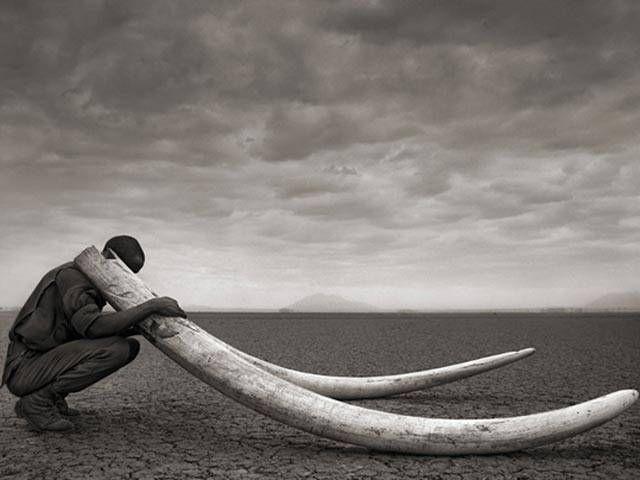Folha de S.Paulo - BBC Brasil - Fotógrafo lança série em preto e branco da vida selvagem na África; confira imagens - 23/10/2013