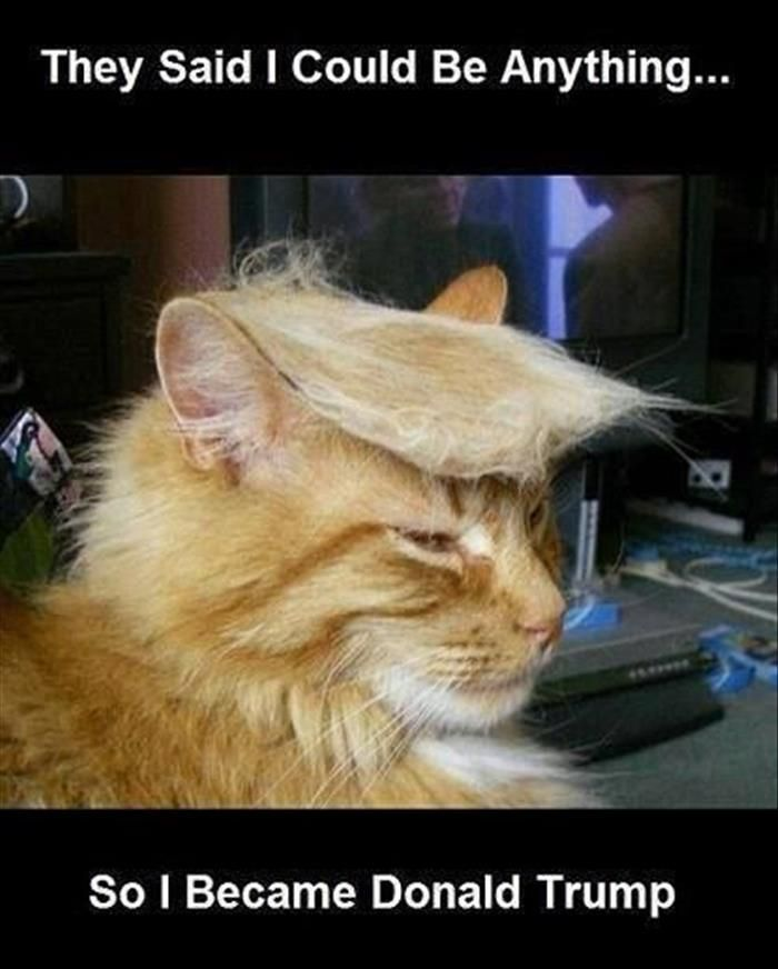 25 Best Ideas About Donald Trump House On Pinterest: Best 25+ Donald Trump Hair Ideas On Pinterest