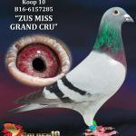 """010 - B16-6157285 """"ZUS MISS GRAND CRU"""" ♀   De Duif"""