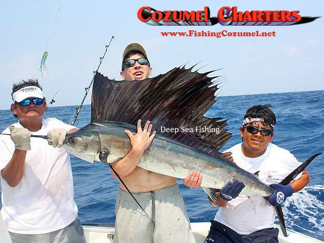 1000 images about cozumel charters on pinterest for Deep sea fishing mexico