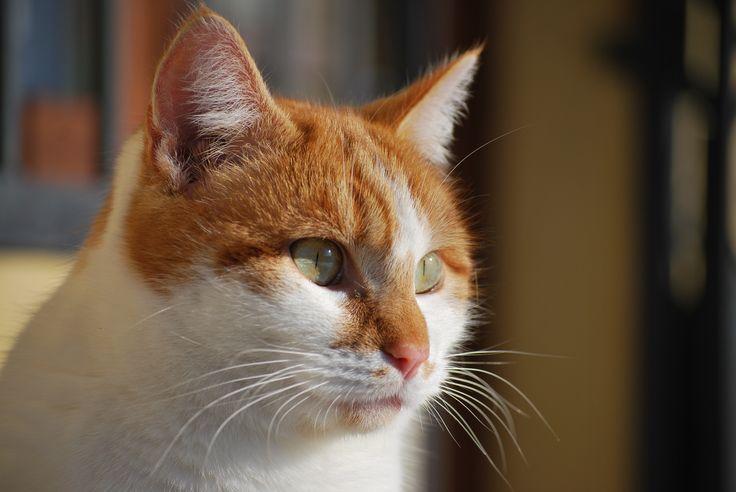 nano 2, cat, gatto