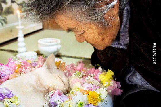 2015年2月22日 : ふくまる天国に旅立つ(享年11才)。(撮影: 伊原美代子 )「みさおとふくまる」misao_fukumaru_11 おっどさん亡くなったんですか…眠っているようですネ…愛し 愛されて幸せだったんですネ…( ´; ω ;` )