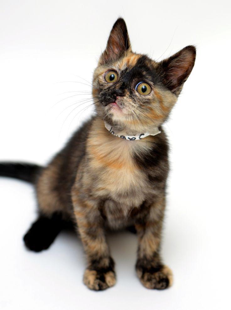 Cats Eyes Ann Ef Bf Bdes