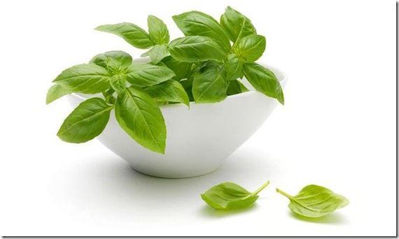 Es bien sabido que muchas plantas, para no decir que son todas, contienen grandes beneficios tanto para el ambiente como para nuestro cuerpo. Una prueba sencilla de eso es la sábila, la cual tiene enormes