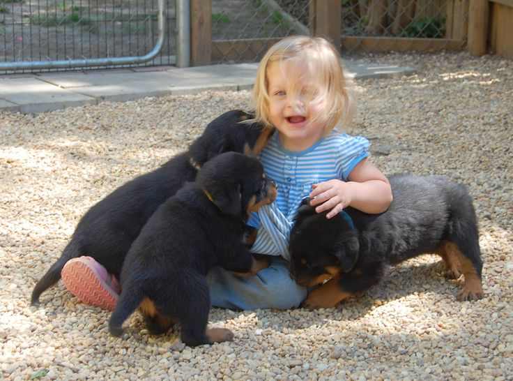 I want a rottweiler puppy!!!
