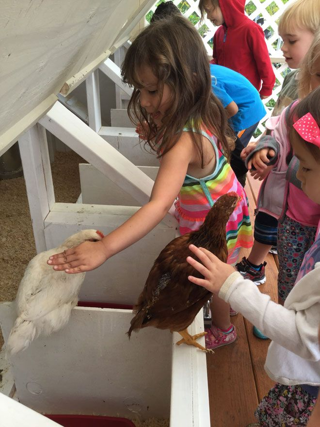"""As I'm sure you now know, we have some new feathered friends here at CMP. Our chickens have taken up their permanent residence in their coop on the east side of the """"soccer field"""" above The Glenn. We have a total of 14 chickens and they sure are growing fast! We won't have 14 for …"""