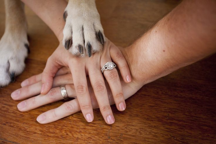 When your pet is your baby, this wedding photo idea makes brilliant sense. LOVE!