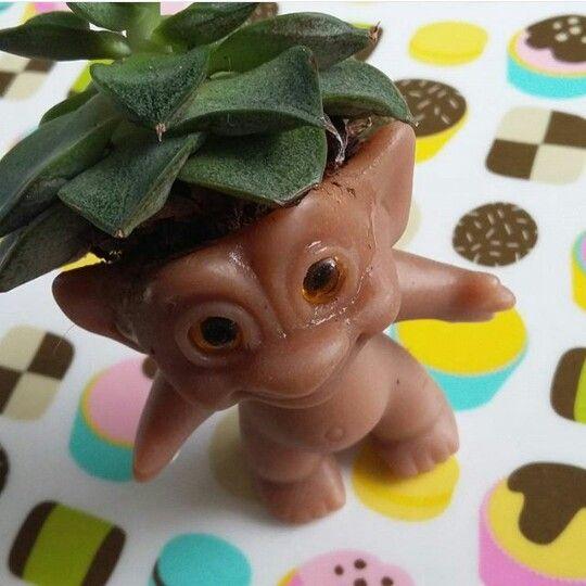 Troll med hår av succulent