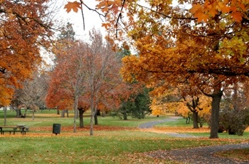 SPOKANE: A diverse collection of shrubs and trees on 57 acres along Garden Springs Creek. Highlights include a rhododendron glen, a maple section, a conifer section and a nature trail with interpretive signs in print and in Braille.