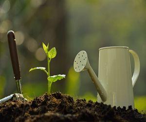 Garden Design and Landscaping Ideas