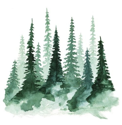 evergreens | watercolor trees