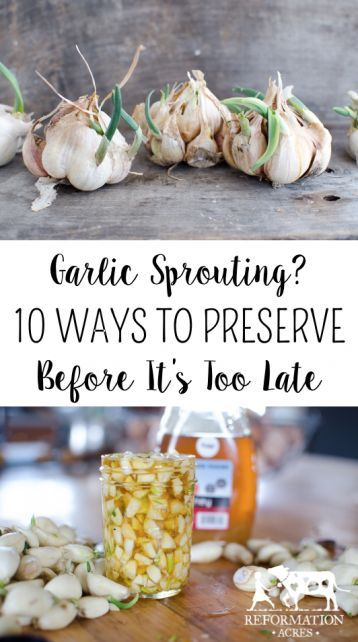 Garlic Sprouting? 10 Ways to Preserve Garlic Before It's Too Late