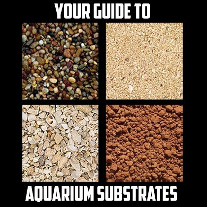 Choosing an aquarium substrate is a very important decision, and not only for aesthetic reasons. This guide will help you make the right choice!