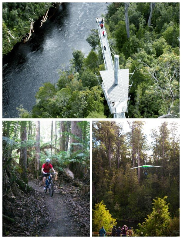 Tahune AirWalk Reserve. Photos by Adventure Forest, article for Think Tasmania.
