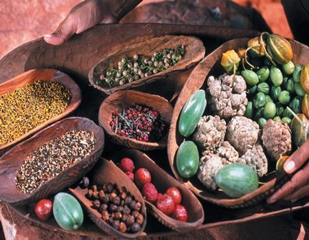Australian Bush Tucker Display at Alice Springs Desert Park - Australian Outback Northern Territory Tourism