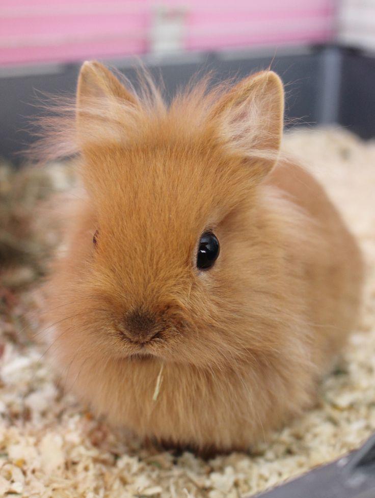 39 besten Kaninchen Bilder auf Pinterest | Zwergkaninchen, Kaninchen ...
