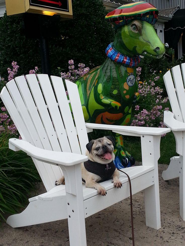 Pugs: Photo