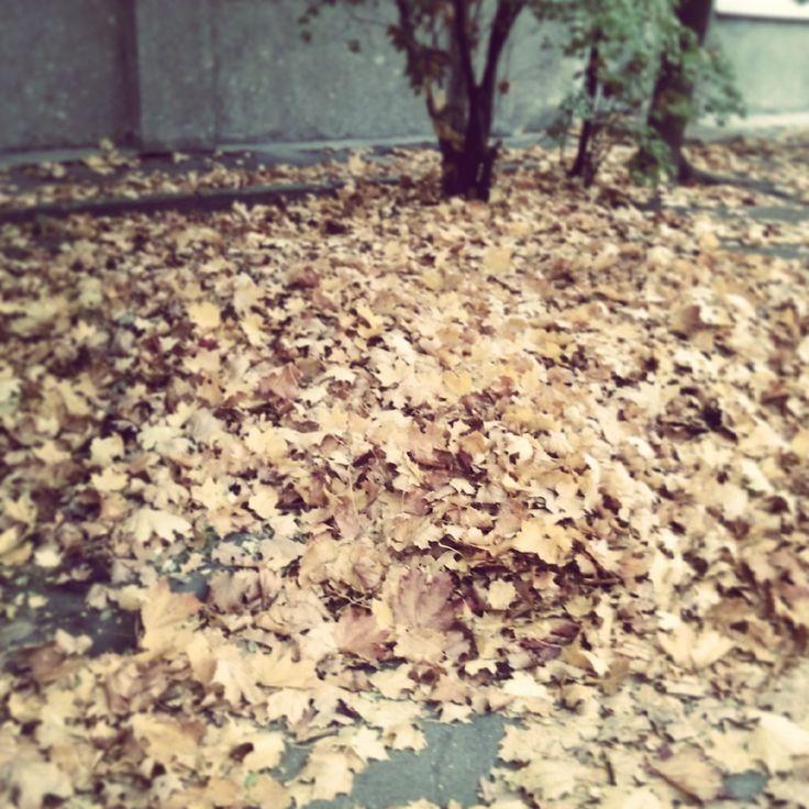 Traces of autumn on A1QA backyard
