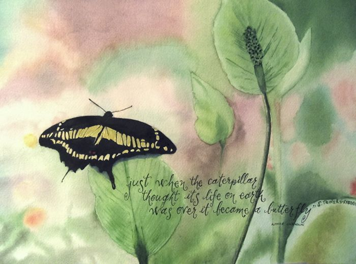Butterfly by Sally Towers-Sybblis