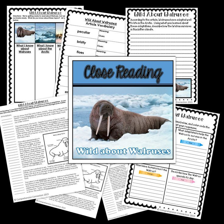 This Close Reading article and supplementary materials will take your students through the Close Reading process and would work well as an introduction to Walrus research or a study of arctic animals. It includes a thinking map for pre-reading, a response sheet for post reading day 1 or 2, and a written prompt for after the third reading. The set is intended to be used in multiple sessions for deepening student understandings and reflections.