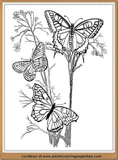 advanced butterfly coloring pages - Advanced Coloring Pages Butterfly