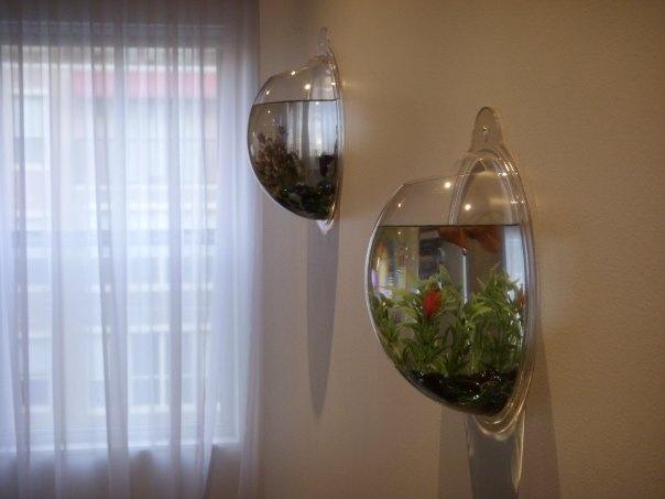 on the wall fish tanks. I would love to have one in my bathroom!