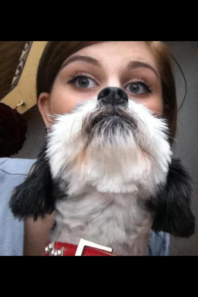 Best Photo BOMB Lol Images On Pinterest Bombers Funny - 25 hilarious brilliantly timed dog photos