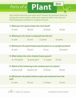 plant quiz kids science science worksheets worksheets plant science. Black Bedroom Furniture Sets. Home Design Ideas