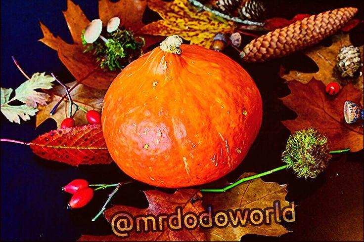 Who like Pumpkins  #autumn #harvest #pumpkin #orange #nature #color #vegetables #halloween for more wonderful photos please follow me on instagram : @mrdodoworld #instagram #photography