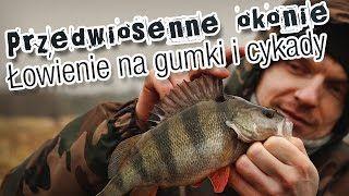 Okonie na przedwiośniu. Łowienie na gumy i cykady. #wędkarstwo #filmywędkarskie #poradnik https://www.youtube.com/user/CoronaFishing/videos