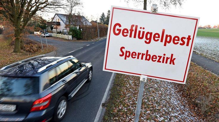 #H5N8: Neue Verdachtsfälle in Garrel und Bösel - NDR.de: kreiszeitung.de H5N8: Neue Verdachtsfälle in Garrel und Bösel NDR.de Im Landkreis…