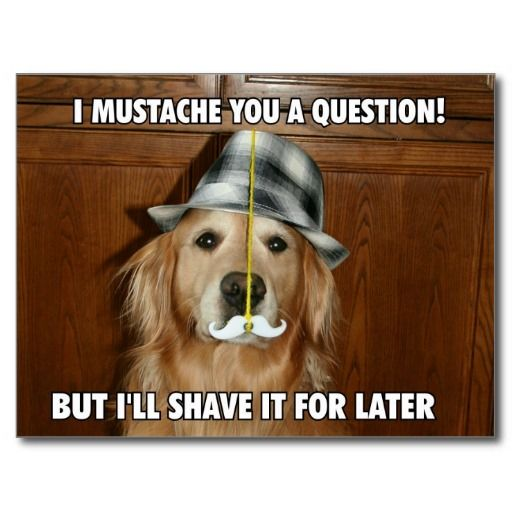 Funny Golden Retriever Mustache You a Question Post Card by #AugieDoggyStore