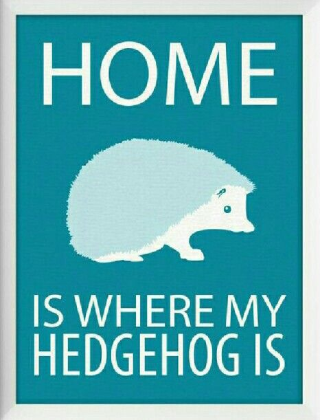 """♡☆ """"Home Is Where My Hedgehog Is!"""" ☆♡"""