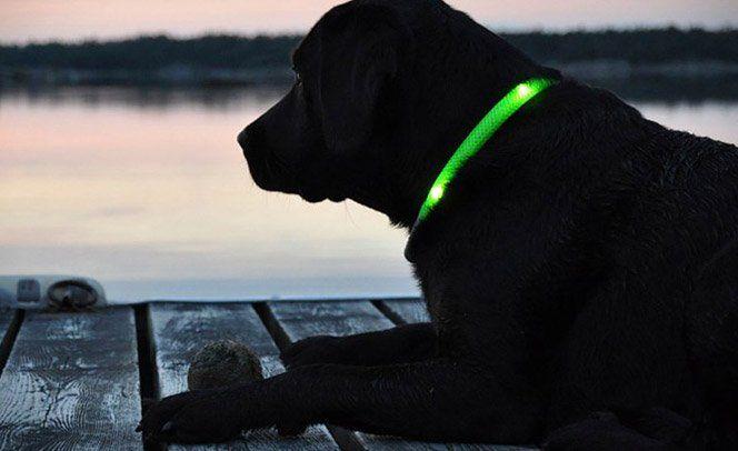 Quem tem cachorros, sabe do prazer de poder soltá-los durante um passeio no parque, por exemplo. Acontece que de noite essa escolha pode ser um tanto quanto perigosa pois a empolgação do cachorro pode fazer com que ele vá para longe ou se enfie em lugares perigosos longe dos seus olhos. Pensando nisso, o Glowdoggie Led Collars foi criado - se trata de uma coleira feita de LED, à prova d'água e com dois anos de garantia.
