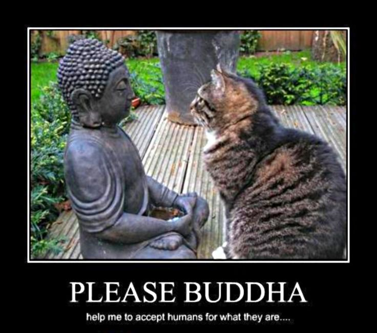 a personal perspective on the topic of buddhism Buddhism: essay on buddha in general, the life of buddha can be seen from many perspectives examples, topics, questions literature - of mice and men - frankenstein - jane eyre - lord of the flies - the great gatsby - to kill a mockingbird.