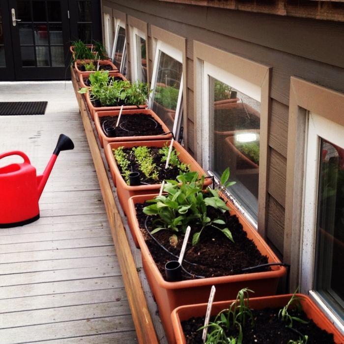 Rooftop Vegetable Garden Ideas: Roof-top Vegetable Gardens Images