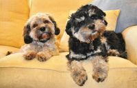 Banksia Park Puppy Review Molly and Harvey, cute, happy, love, puppies