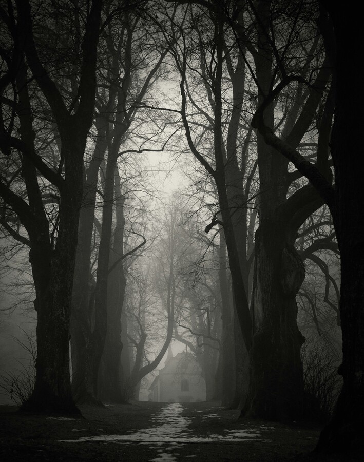 dark places forest trees - photo #11