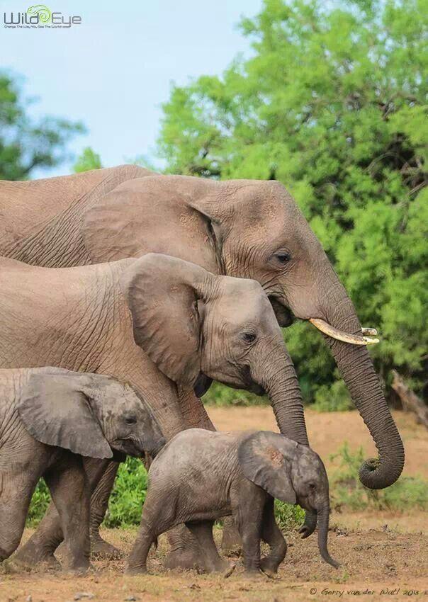 Family - Tuli