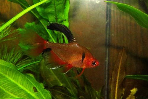 28 Best Tetra Aquaria Images On Pinterest Fish Aquariums