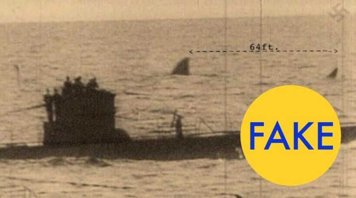 Remember that dumb megalodon documentary released by the Discovery Channel for Shark Week back in 2014? It was completely fake. But something tells me that we'll be living with the fake facts peddled by that show for many years to come. If you've seen the image above, don't believe it. The photo is totally fake.