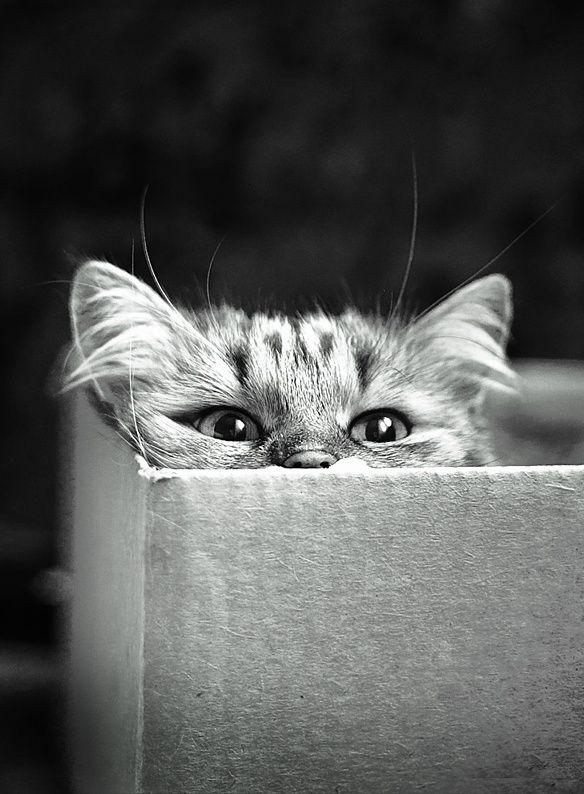 [Meow]