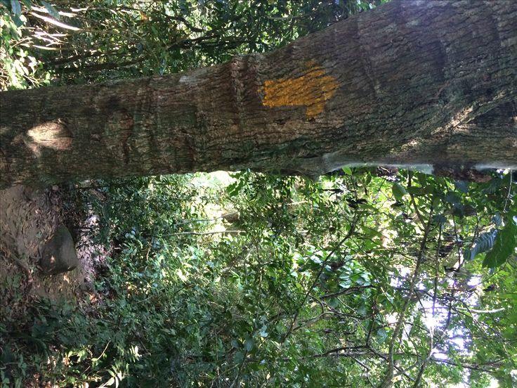 Primeira seta, encontrada logo na entrada da trilha