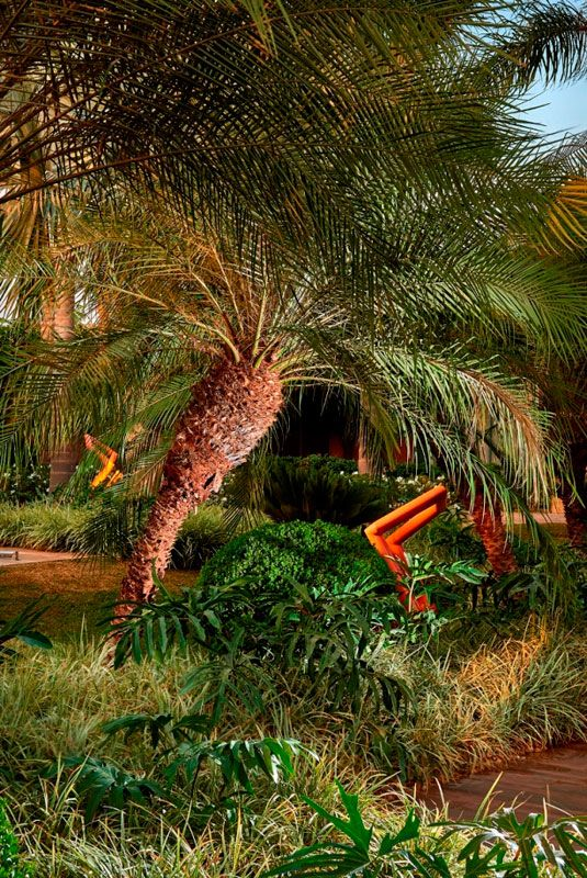 plantas jardins tropicais : plantas jardins tropicais:1000+ images about Jardins Tropicais on Pinterest