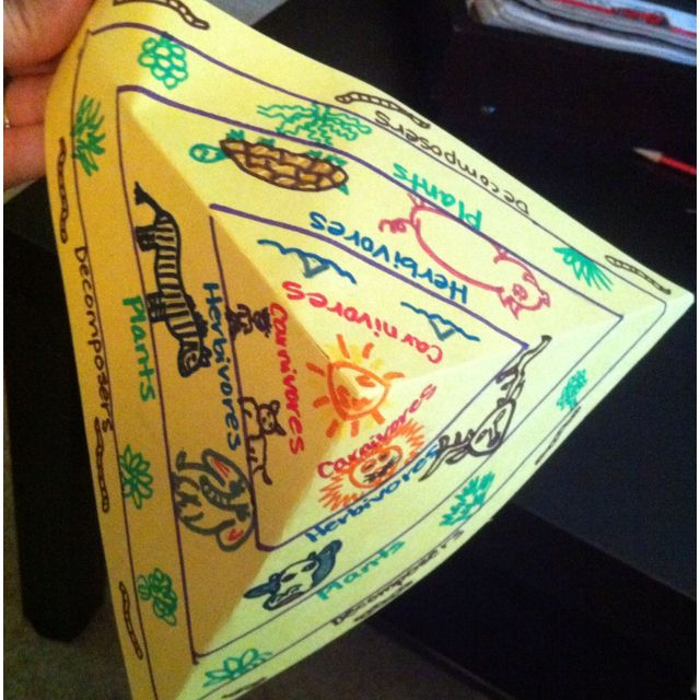 """Idea for Ecology Pyramids foldable!   (Okay, I know, this particular pic is for a food chain/web, and, yes it's got some gross errors, but I like the overall idea for the foldable.) For each side: Energy Pyramid, Numbers Pyramid, & Biomass Pyramid! I like it!  You could also do something like food """"webs"""" (trophic levels) for 3 different biomes! Compare and contrast!"""